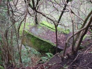 The Printers' Stone, one of the overgrown rock exposures in Rouken Glen. © Steve Edwards.